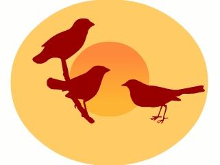 весенние дни наблюдения птиц